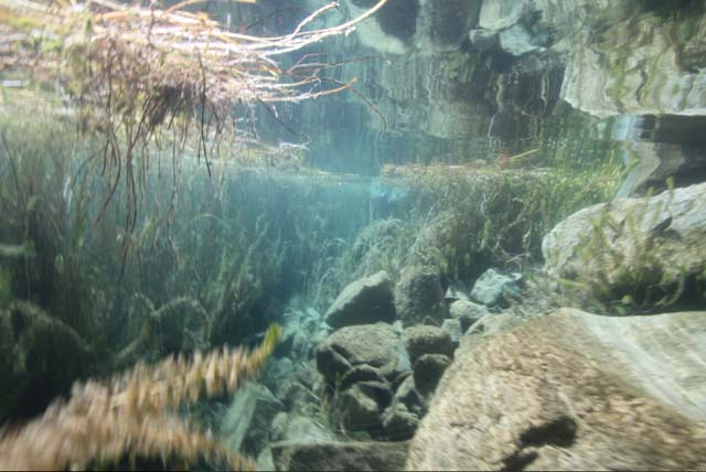An underwater look at the southern shore of Laguna Negra, captured by Gordon Brown. Credit: XenoQuest Media